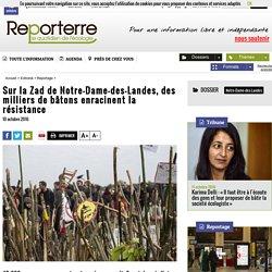 Sur la Zad de Notre-Dame-des-Landes, des milliers de bâtons enracinent la résistance