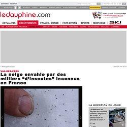 """La neige envahie par des milliers """"d'insectes"""" inconnus en France"""