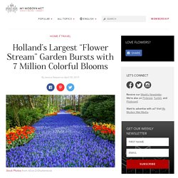 Enjoy Over 7 Million Blooms in Holland's Largest Flower Garden