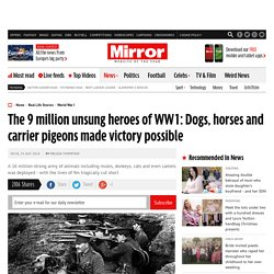 The 9 million unsung heroes of WW1: Dogs, horses and carrier pigeons made victory possible
