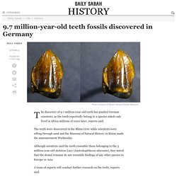 9.7 million-year-old teeth fossils discovered in Germany