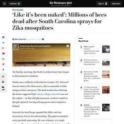 'Like it's been nuked': Millions of bees dead after South Carolina sprays for Zika mosquitoes