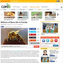 Millions of Bees Die in Florida