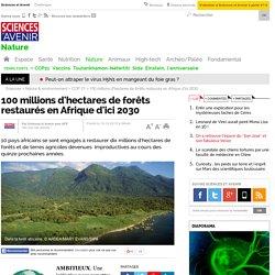 100 millions d'hectares de forêts restaurés en Afrique d'ici 2030