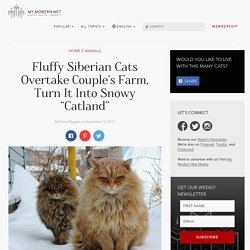 """""""Millions"""" of Majestic Siberian Cats Live in Couple's Farm-Turned-Catland"""