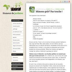 Mimosa gelé? Pas touche ! - Conseils jardin - Daniel LysConseils jardin – Daniel Lys