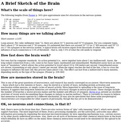 Mind Uploading: Brain Facts