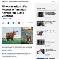 Minecraft in Real Life: Retoucher Turns Real Animals Into Cubic Creations