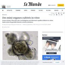 Des mini-organes cultivés in vitro