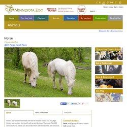 Minnesota Zoo Horse - Minnesota Zoo