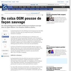20MINUTES (Suisse) 23/05/12 Bâle - Du colza OGM pousse de façon sauvage