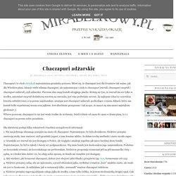 Mirabelkowy blog: Chaczapuri adżarskie