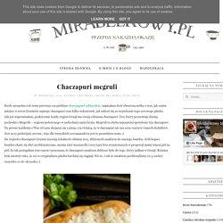 Mirabelkowy blog: Chaczapuri megruli