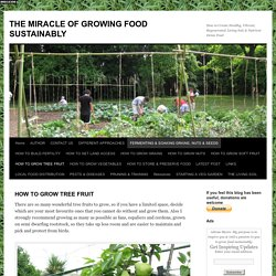 THE MIRACLE OF GROWING FOOD SUSTAINABLY