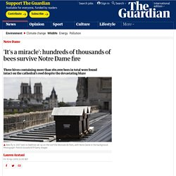 'It's a miracle': hundreds of thousands of bees survive Notre Dame fire