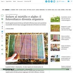Solare al mirtillo e alghe: il fotovoltaico diventa organico