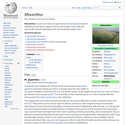 Miscanthus - Wikipedia, the free encyclopedia - (Build 201004010