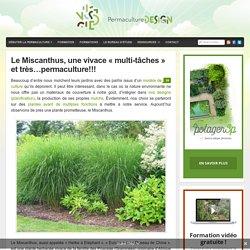 """Le Miscanthus, une vivace """"multi-tâches"""" et très...permaculture!!!"""