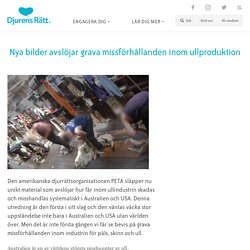 Nya bilder avslöjar grava missförhållanden inom ullproduktion