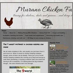 The 9 worst mistakes a chicken keeper can make - Murano Chicken Farm