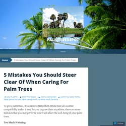 5 Mistakes You Should Steer Clear Of When Caring For Palm Trees