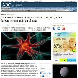 Las «misteriosas neuronas masculinas» que les hacen pensar más en el sexo