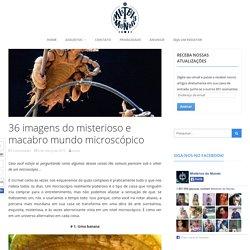 36 imagens do misterioso e macabro mundo microscópico