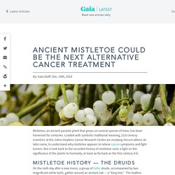 Ancient Mistletoe Could Be the Next Alternative Cancer Treatment