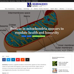 Protein in mitochondria appears to regulate health and longevity