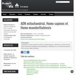 ADN mitochondrial, Homo sapiens et Homo neanderthalensis