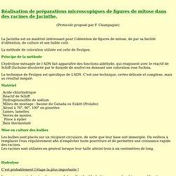 """préparation des lames """"Mitoses de racines de jacinthe"""""""