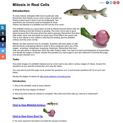 Mitosis in Real Cells