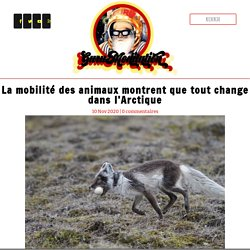 La mobilité des animaux montrent que tout change dans l'Arctique