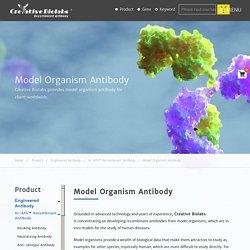 Model Organism Antibody