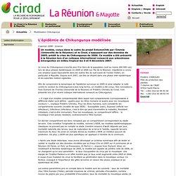 CIRAD 04/01/08 L'épidémie de Chikungunya modélisée
