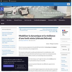 Modéliser la dynamique et la résilience d'une forêt mixte (chênaie/hêtraie)