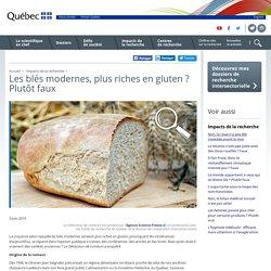 Les blés modernes, plus riches en gluten? Plutôt faux
