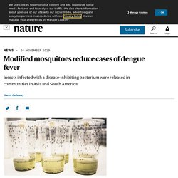 NATURE 26/11/19 Modified mosquitoes reduce cases of dengue fever - Insects infected with a disease-inhibiting bacterium were released in communities in Asia and South America.