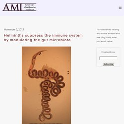 Helminths suppress the immune system by modulating the gut microbiota — The American Microbiome Institute