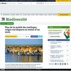 Plus de la moitié des antilopes saïgas ont disparu en moins d'un mois
