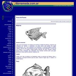 Mojarra - Pacú