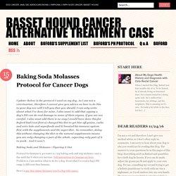 Basset Hound Cancer Alternative Treatment Case