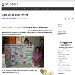 Mold Bread Experiment