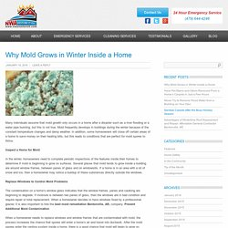 Why Mold Grows in Winter Inside a Home