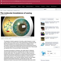 The molecular breakdance of seeing