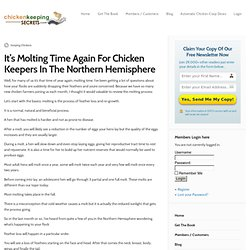 It's Molting Time Again For Chicken Keepers In The Northern Hemisphere « Chicken Keeping Secrets – How To Keep Chickens At Home
