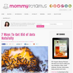7 Ways To Get Rid of Ants Naturally | MommypotamusMommypotamus |