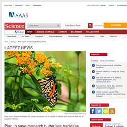 Plan to save monarch butterflies backfires