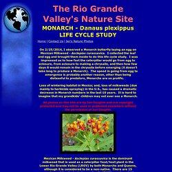 Monarch - Danaus plexippus Life Cycle Study