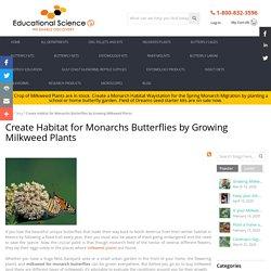 Create Habitat for Monarchs Butterflies by Growing Milkweed Plants